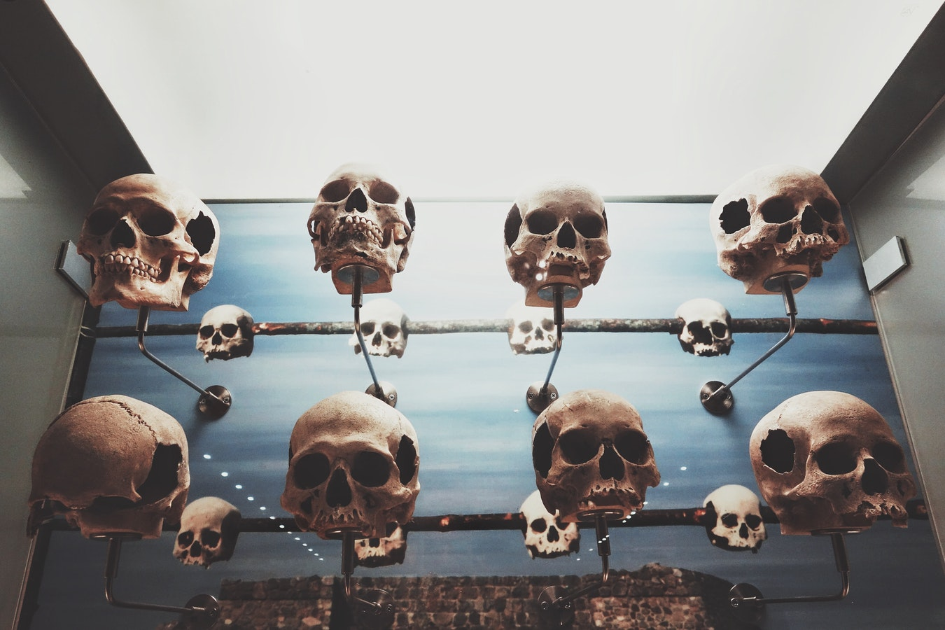 calavera de halloween exhibicion
